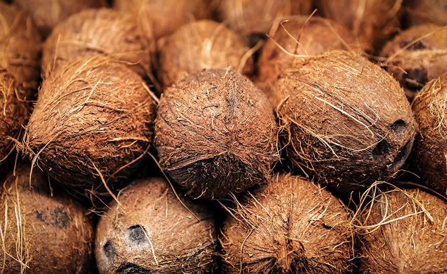 RheVision coconut fiber